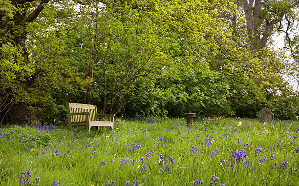 Bench in bluebell field – Foto