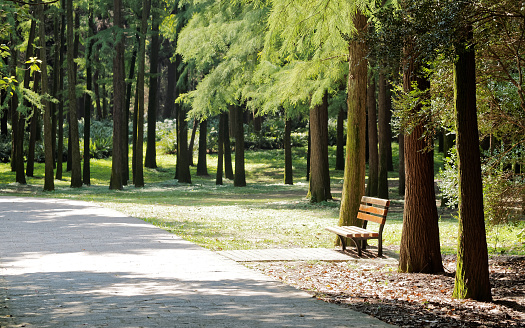 istock Bench in forest, summer or autumn landscape. 504278340