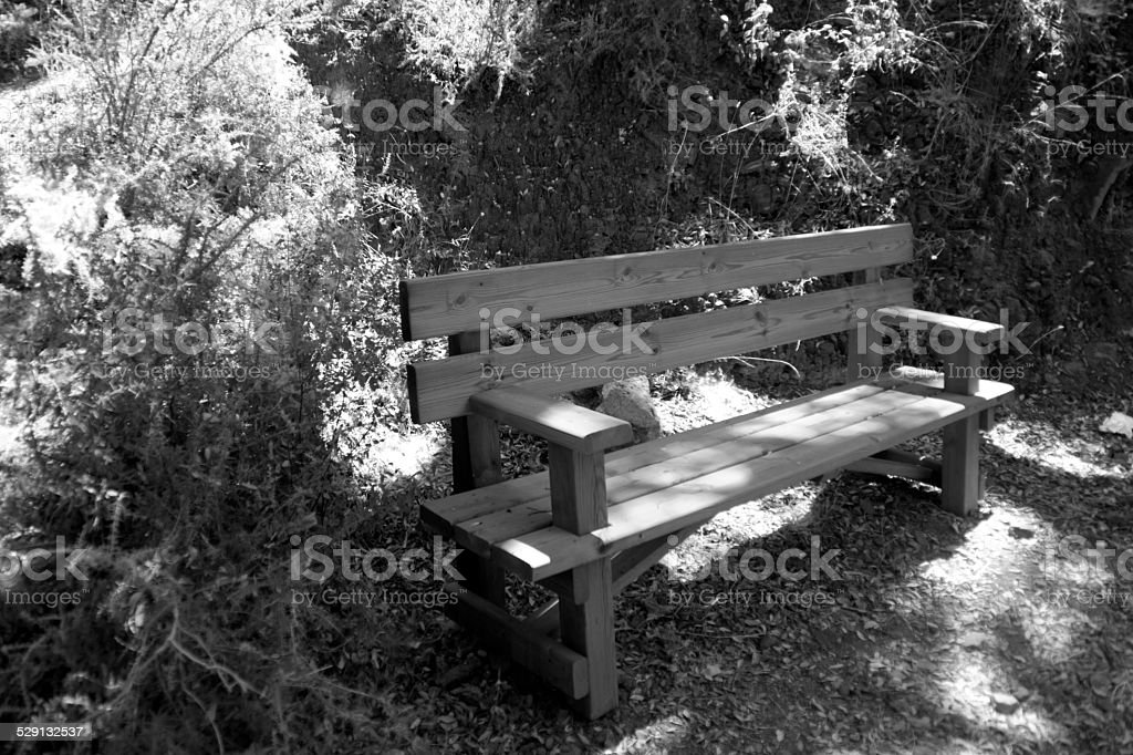 Bench in nature in B&W stock photo