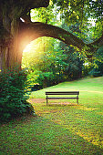 Empty bench under the tree against sunset