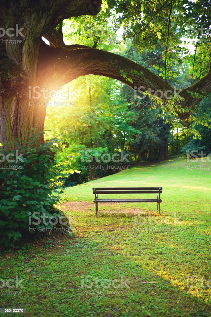 Bench in park at sunset stock photo