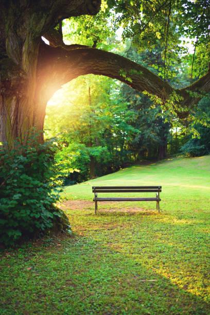 bänk i parken vid solnedgången - bench bildbanksfoton och bilder