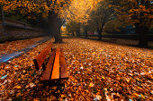bench in park on autumn with leaves on the ground