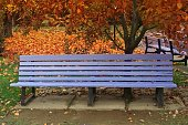 Bench in the autumn Park among fallen leaves for design.