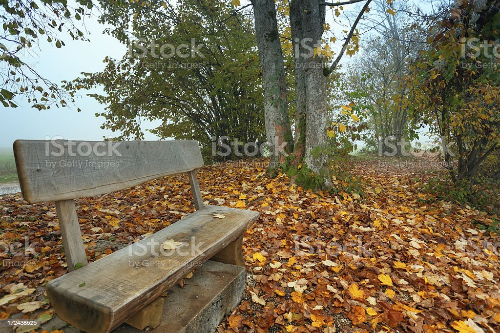 bench in the autumn royalty-free stock photo