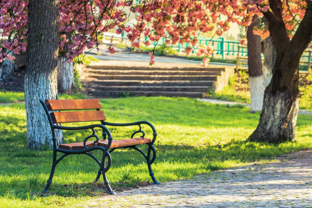 bench in the city park in pink cherry blossom stock photo