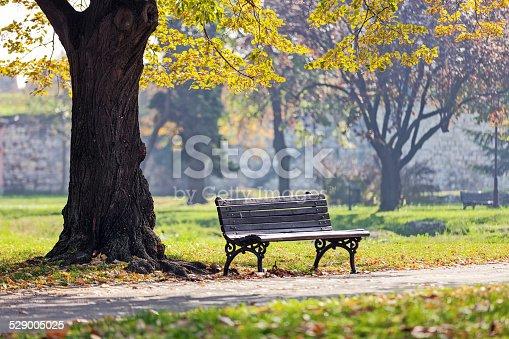 Bench under the tree in the Kalemegdan park, Belgrade Serbia