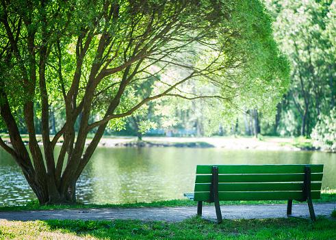 Bench In The Park Under A Beautiful Tree Summer Spring Theme Of Recreation In The City - zdjęcia stockowe i więcej obrazów Bez ludzi