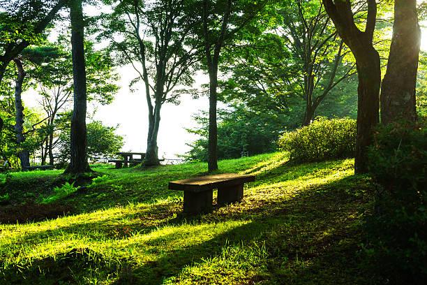 bench in the park, yamanaka lakeside - yamanaka lake ストックフォトと画像