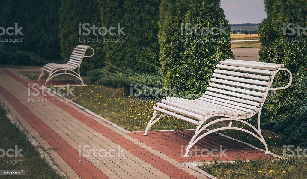 Bench in the summer garden - foto de stock