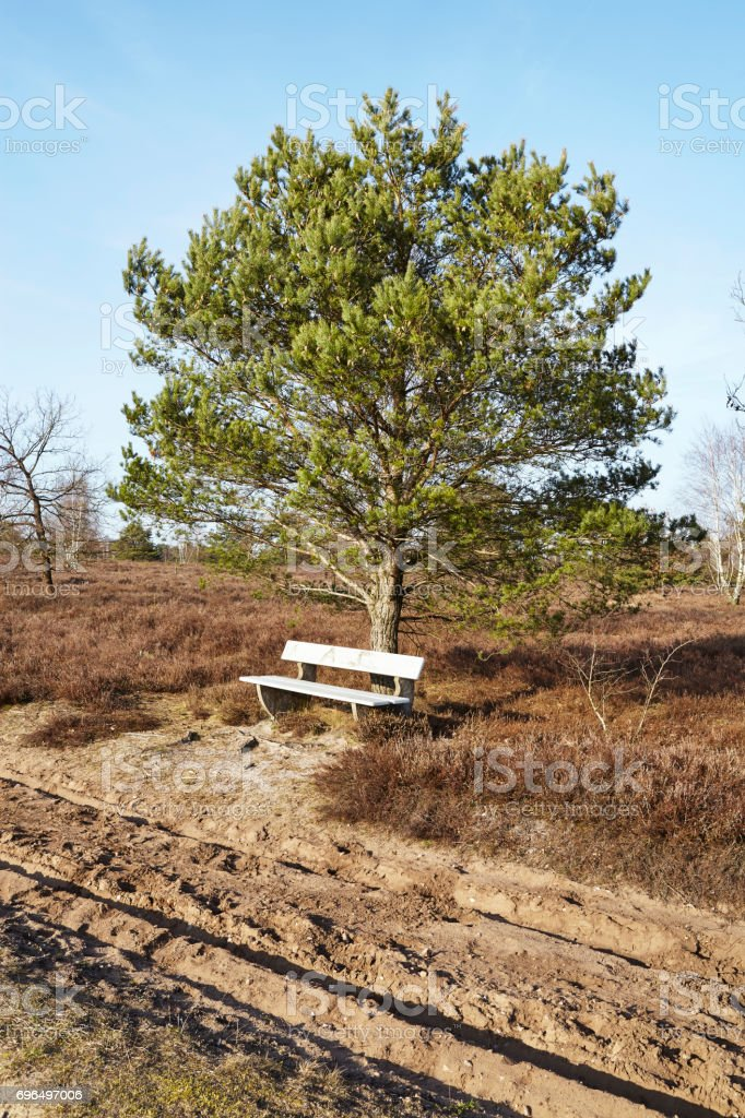 Bench into heathland in spring stock photo