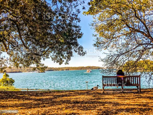 Photo of A bench to sit and relax near the Sea with a duck roaming around the bench and women sitting under the shade facing the sea with cool breeze coming in and reading a book.