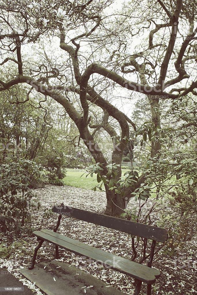 Bench Under Big Magnolia Tree Stock Photo Download Image Now Istock