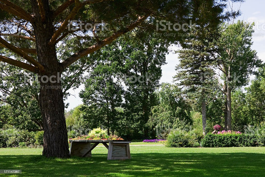 Heavy Duty Counter Stools, Bench Under Shade Tree In Landscaped Garden Stock Photo Download Image Now Istock
