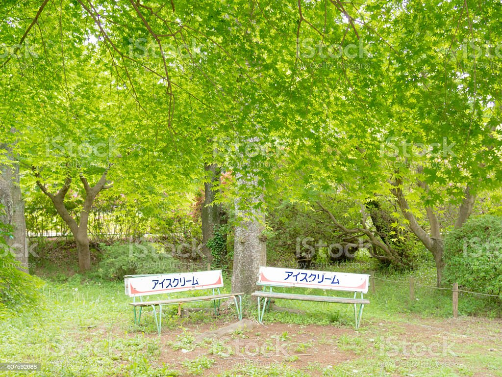 Bench under the fresh green ストックフォト