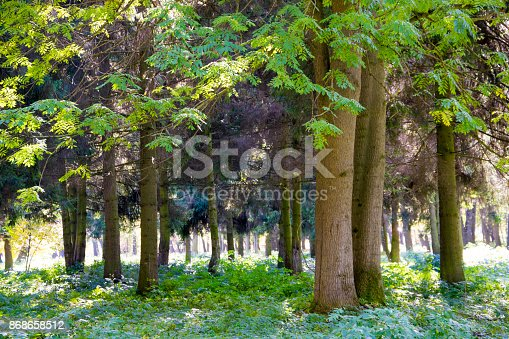 istock Bench under the tree in the Royal Botanic Gardens in London 868658512