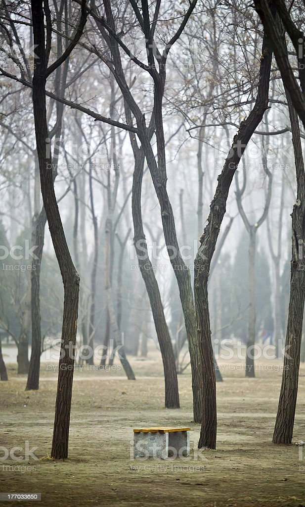 bench under trees royalty-free stock photo