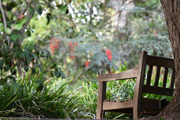 bench with tree looking into a garden - steven harrie stock pictures, royalty-free photos & images