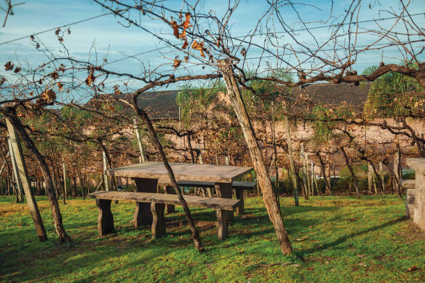 Benches and stone table amid a vineyard Autumn landscape with benches and stone table in a vineyard with leafless branches from a winery near Bento Gonçalves. A friendly country town in southern Brazil famous for its wine production. southern charm stock pictures, royalty-free photos & images
