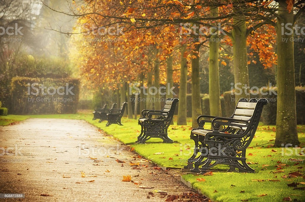 Benches in autumn park stock photo