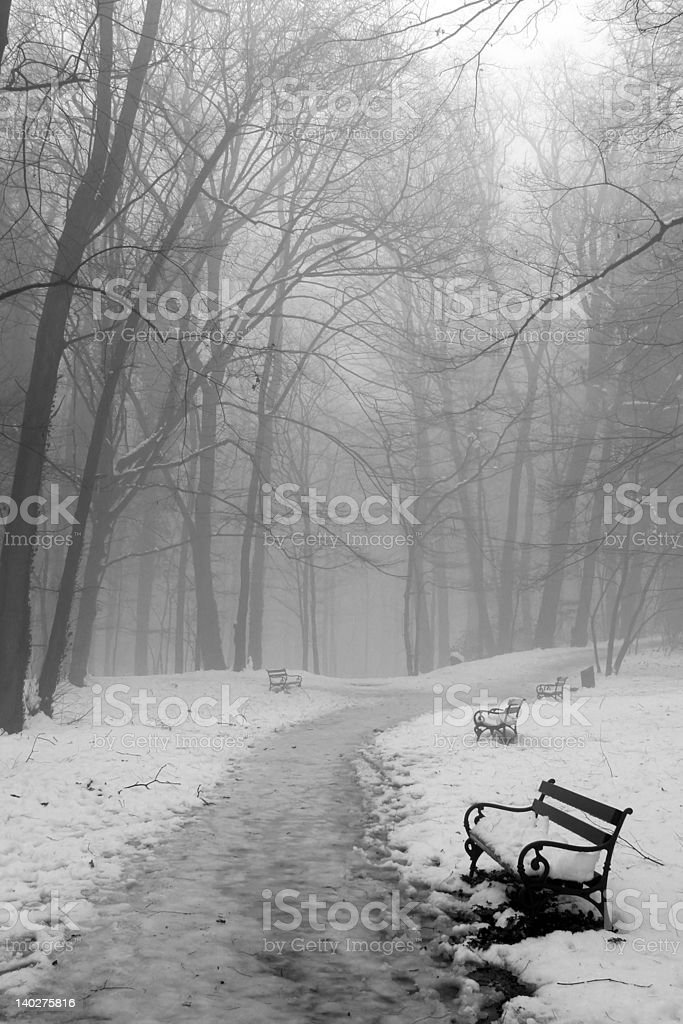 Benches in woods royalty-free stock photo