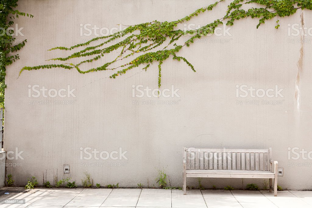 benches, ivy, stock photo