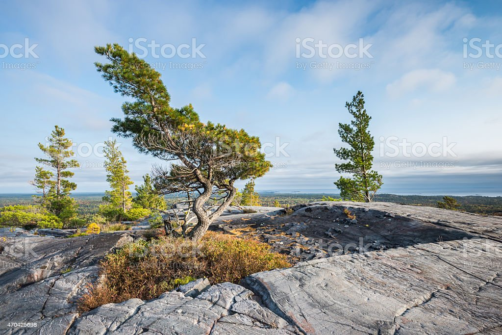 Bending tree is struggling for life on a mountain top stock photo