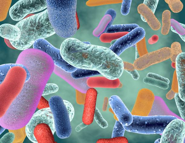 Beneficial healthy intestinal bacterium micro flora. Beneficial healthy intestinal bacterium. lactobacillus stock pictures, royalty-free photos & images