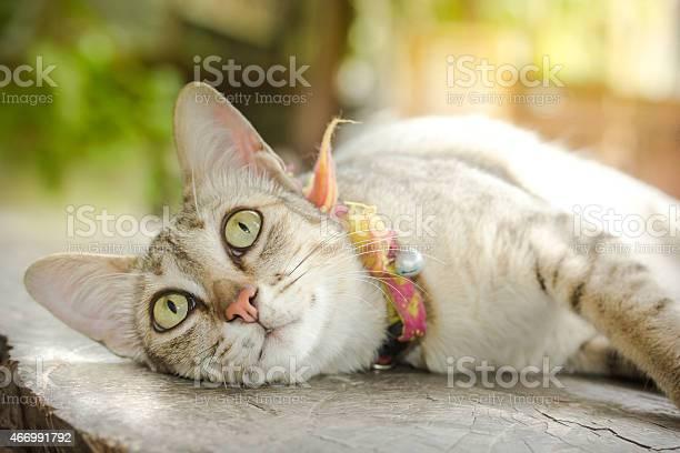 Bengal cat picture id466991792?b=1&k=6&m=466991792&s=612x612&h=7jp5srq7pnaqggghoejdisp27knmrxa4raihjchifxq=