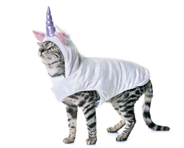bengal cat - unicorns stock photos and pictures