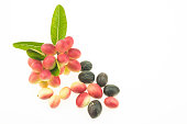Bengal Currants are fruits Thai herbs that are high in iron and vitamin C.