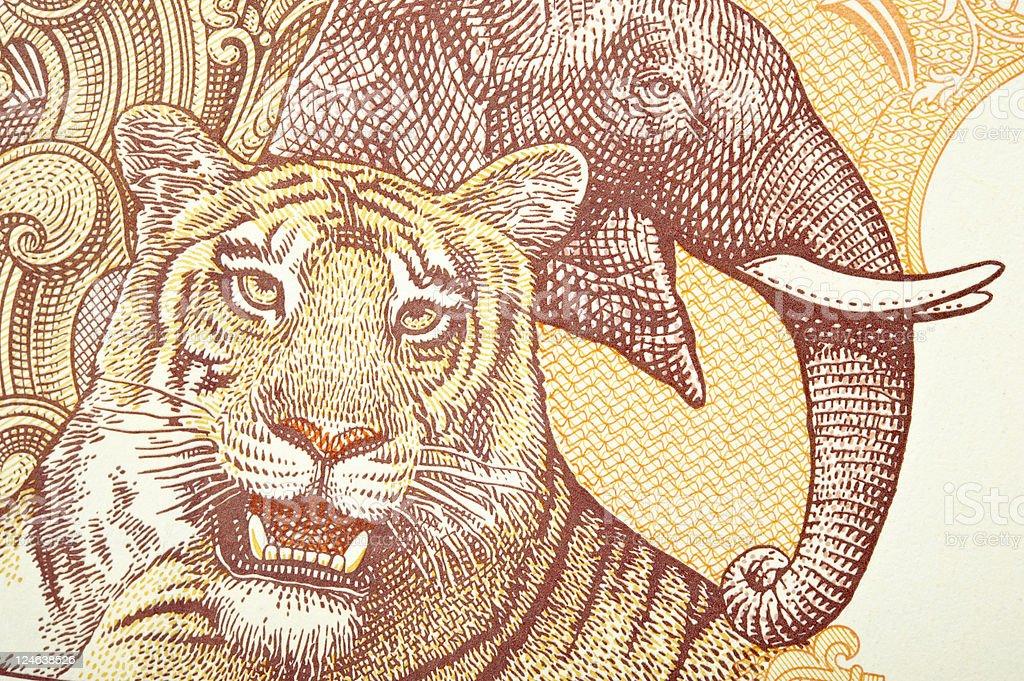 Tigre de bengala y Elephant - foto de stock