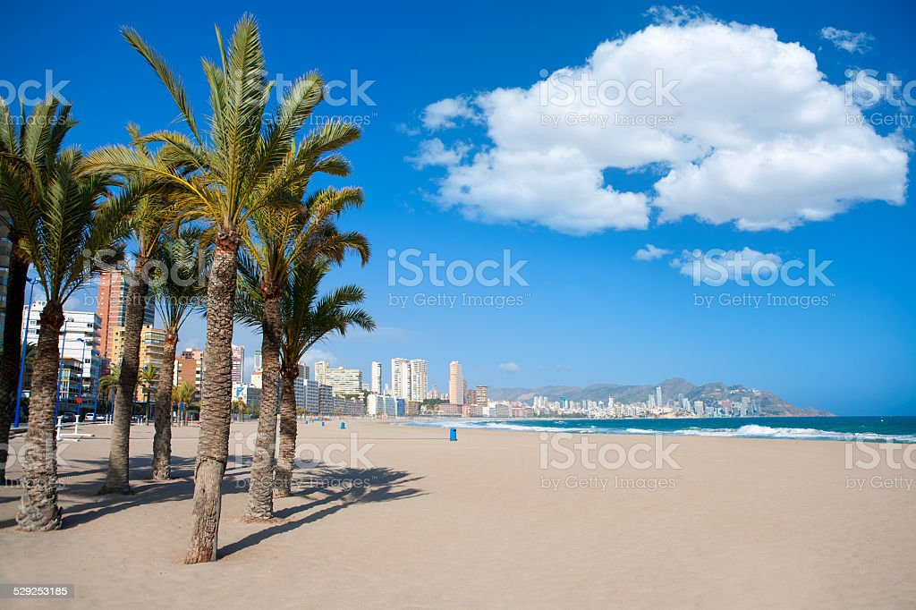 Benidorm Alicante beach palm trees and Mediterranean stock photo