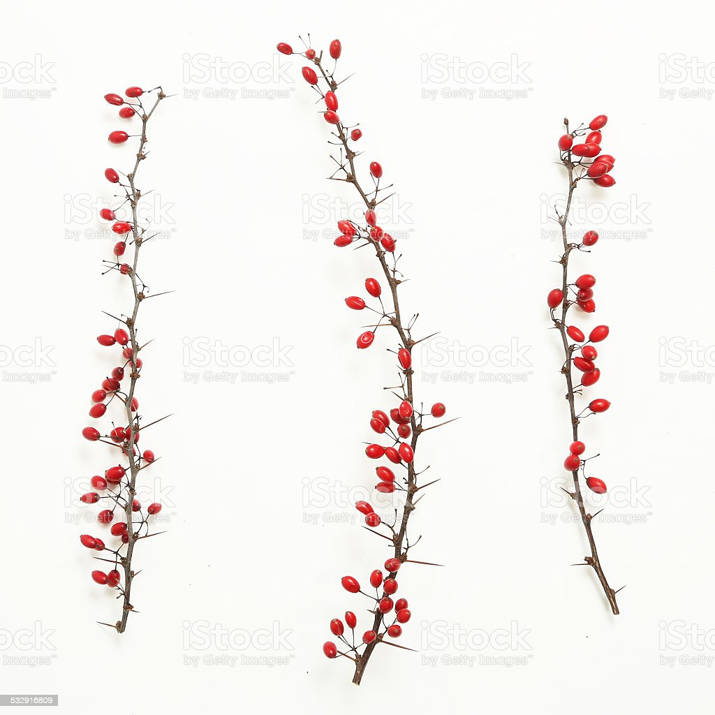 Berberis vulgaris twigs stock photo
