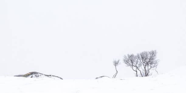 Berch árvores em uma colina na neve - foto de acervo