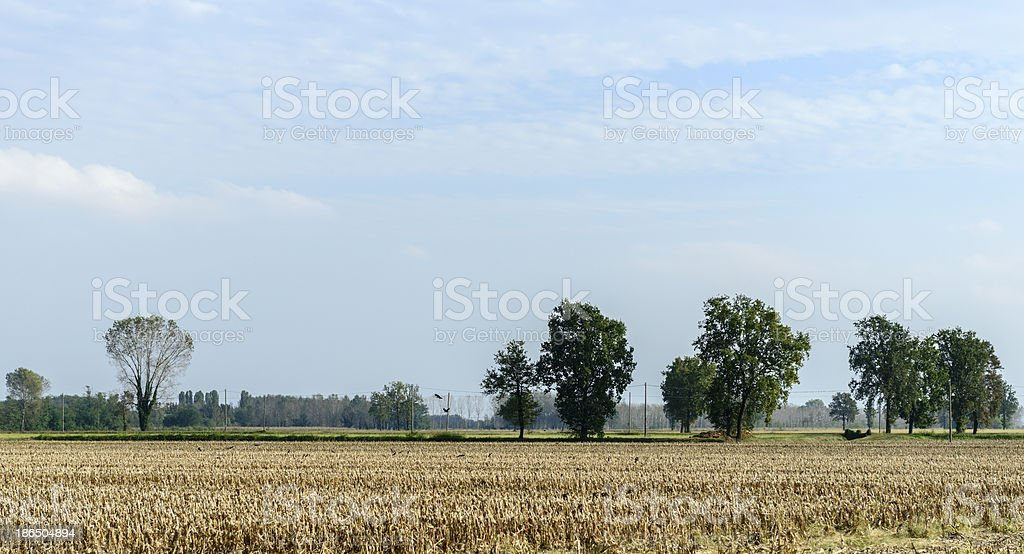 Bereguardo (North Italy) Corn field after harvest royalty-free stock photo