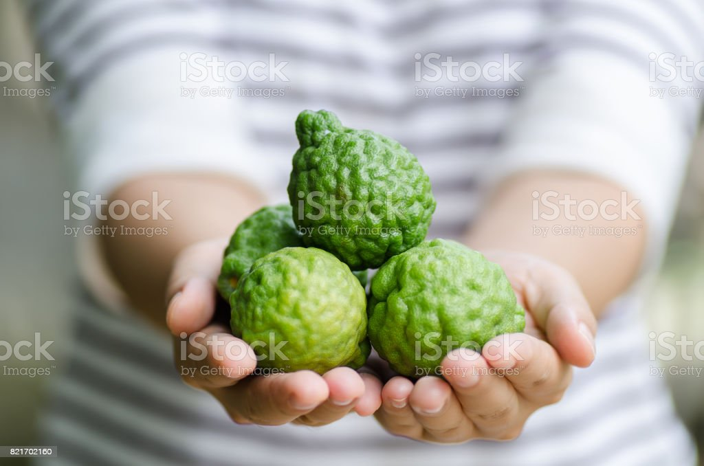 Bergamot fruit in hand stock photo