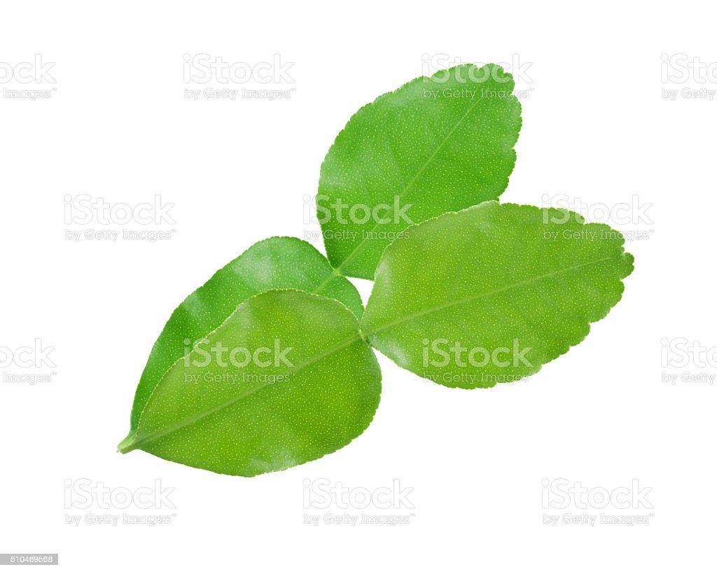 Goldmelisse Blätter – Foto