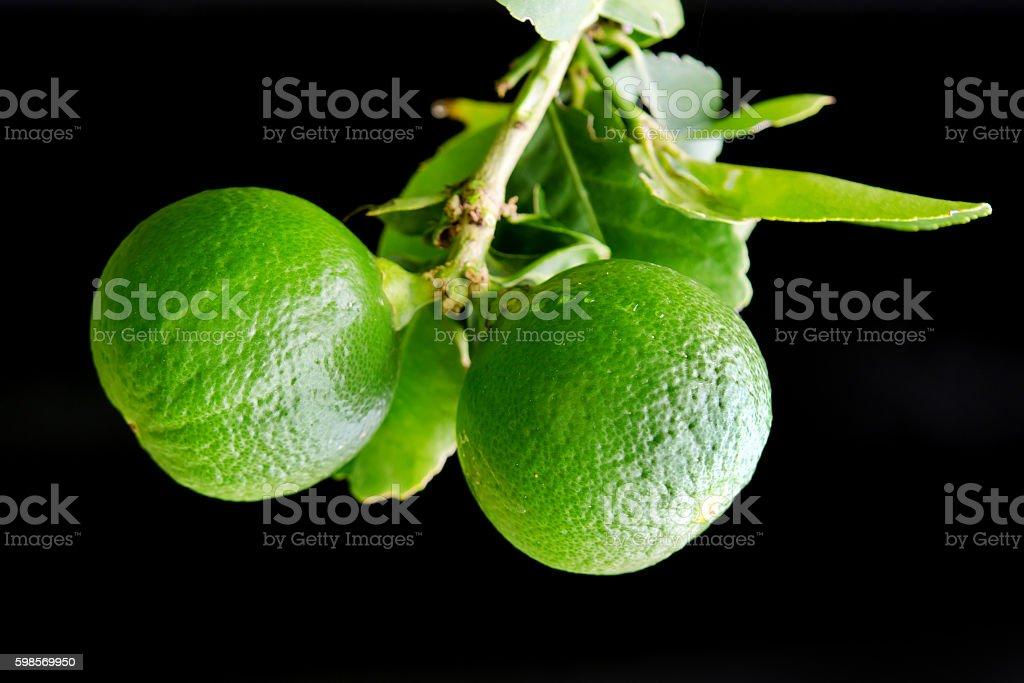 Bergamot orange hanging fruits with leaf isolated on black backg - Photo