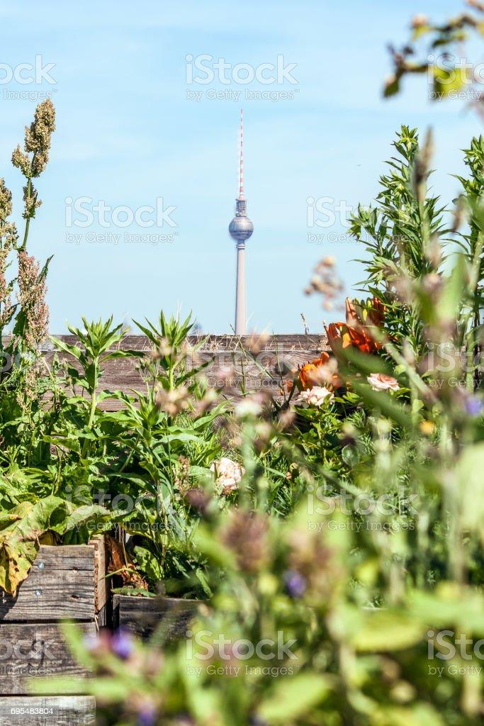 Berliner Sommer – Foto