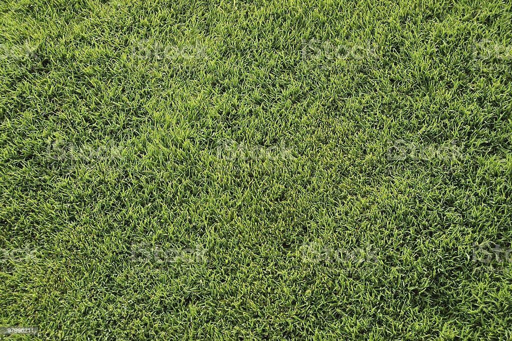 Bermuda grass top view royalty-free stock photo
