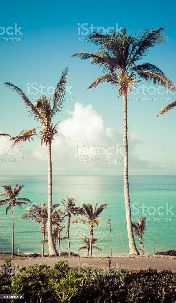 Bermuda Palms stock photo