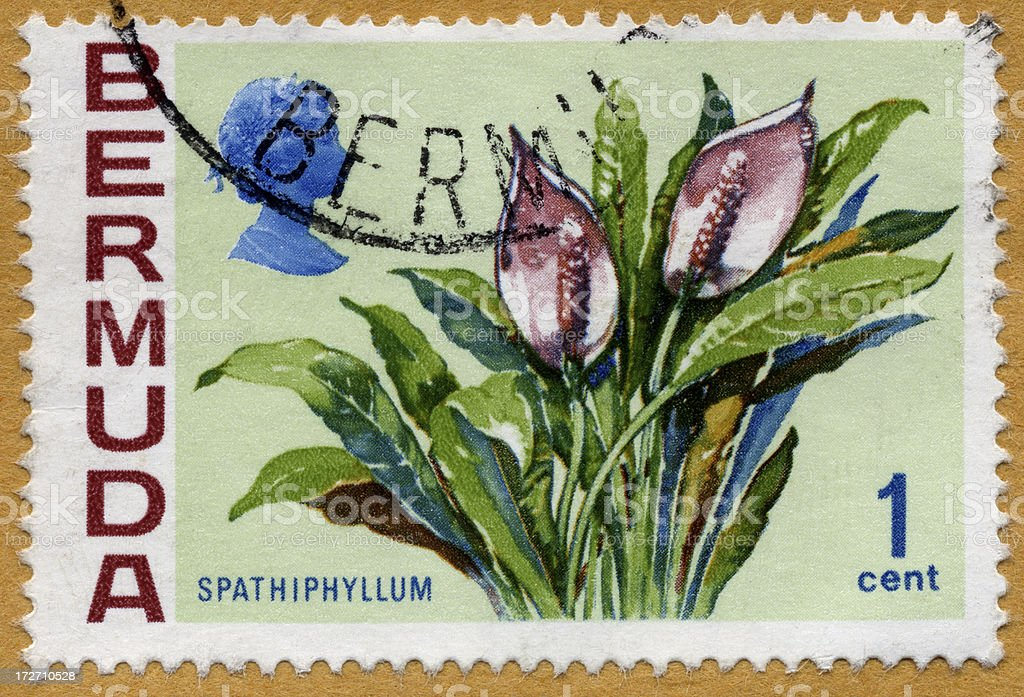 Bermuda Spathiplyllum Postage Stamp royalty-free stock photo