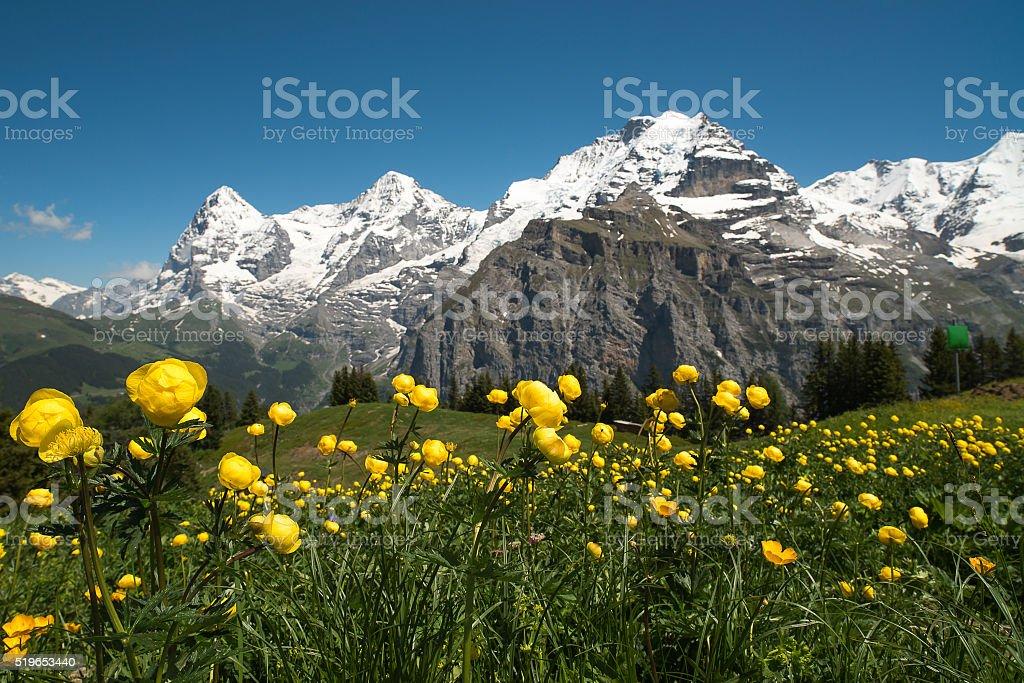 Berner Alpen, Schweiz – Foto