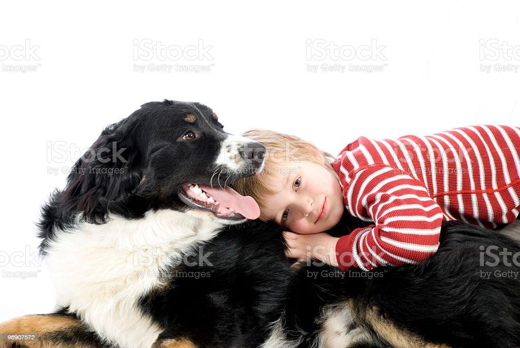 berneses dog with boy, garcon et bouvier bernois animal love stock photo