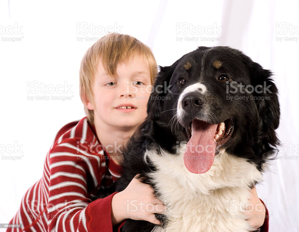 berneses dog with boy, garcon et bouvier bernois stock photo