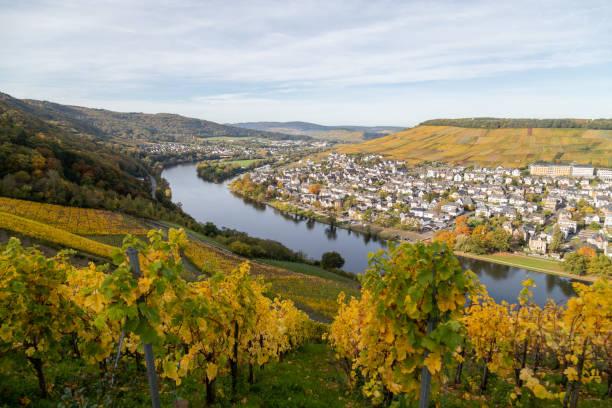 bernkastel-kues och floden mosel på hösten med mångfärgad vingård i förgrunden - bernkastel kues höst bildbanksfoton och bilder