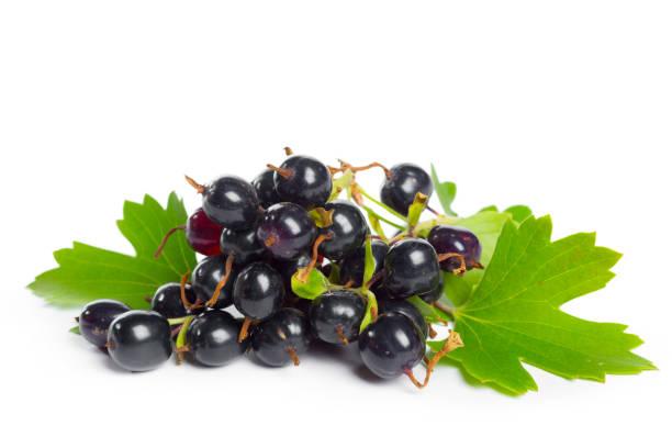 緑の葉と果実黒スグリ。新鮮なフルーツ、白い背景で隔離。 ストックフォト