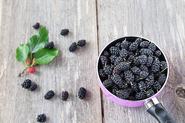 berries black mulberry - amoreiras imagens e fotografias de stock