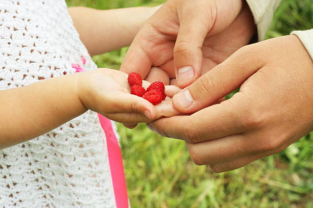 berries in the hand stock photo